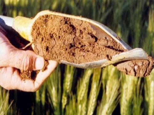 保水松土肥用了就是好