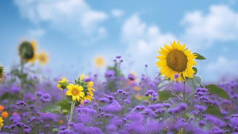 谈花卉对心理的作用