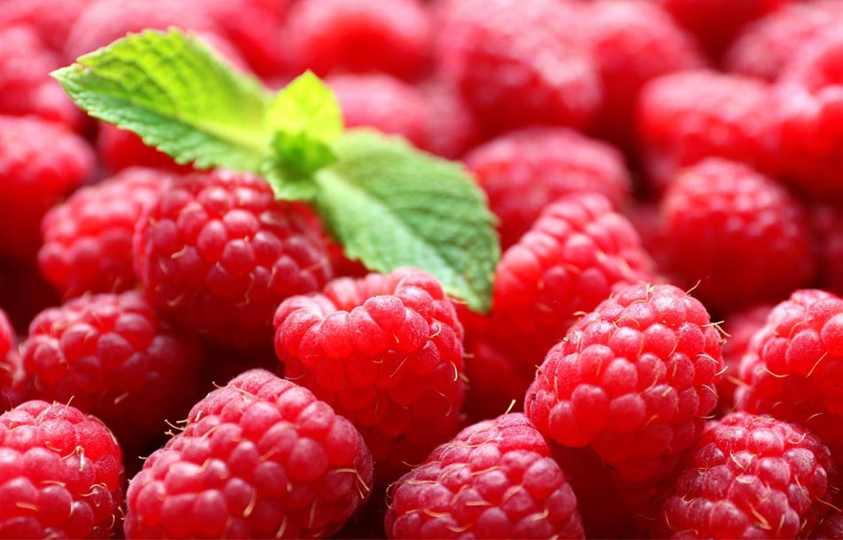 樹莓的病蟲防治方法