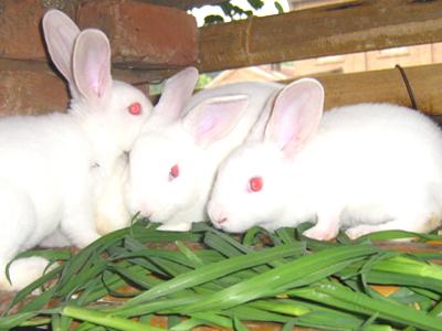 中国畜牧业协会兔业分会二届二次常务理事会纪要