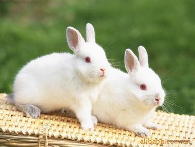 兔绒——造物主赐予人间的灵物